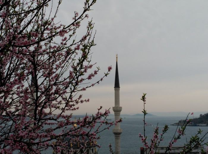 2016.03.22-09.50-theordinarylifeofm_the-ordinary-life-of-m_marta-moslw_istanbul_cihangir_beyoglu_spring_nature_flowers_mosque_bosphorus_04